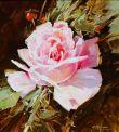1021 Rose