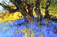 Roe and Bluebells
