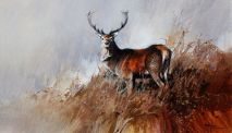 1026 Red Deer Stag