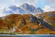 Loch Linnhe / Gannets