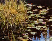 Pochard & Waterlillies