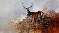 1026 Red Deer Stag