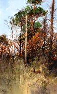 Roe & woodland