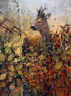 Roebuck - by Alan B Hayman