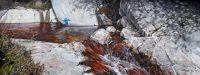 Kingfishers and Hill Burn