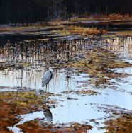 Sunset Marsh - Heron