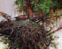 Golden eagle & chicks