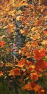 Maple Tree - Jay