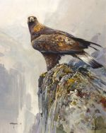 Immature Golden Eagle