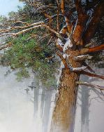 Scots Pine and Black Grouse