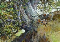 Pheasants and Beech Tree
