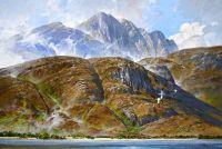 Loch Linnhe - Gannets